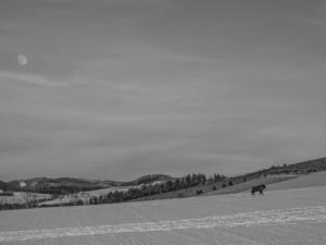 2019 01 Les bisons 4 -  Hans Georg Bette