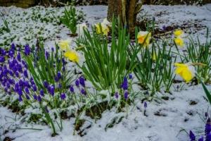 2019 03 Dernière neige avant le printemps à Schmallenberg (1)-  Hans Georg Bette