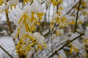2019 03 Dernière neige avant le printemps à Schmallenberg (2)-  Hans Georg Bette