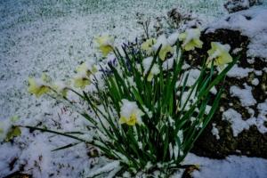 2019 03 Dernière neige avant le printemps à Schmallenberg (6)-  Hans Georg Bette