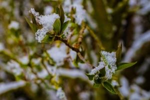 2019 03 Dernière neige avant le printemps à Schmallenberg (7)-  Hans Georg Bette