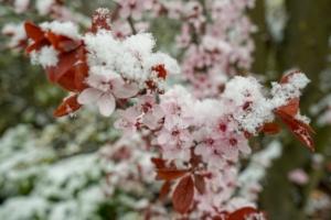 2019 03 Dernière neige avant le printemps à Schmallenberg -  Hans Georg Bette